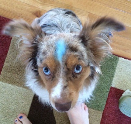 Yup, even the dog was blue.